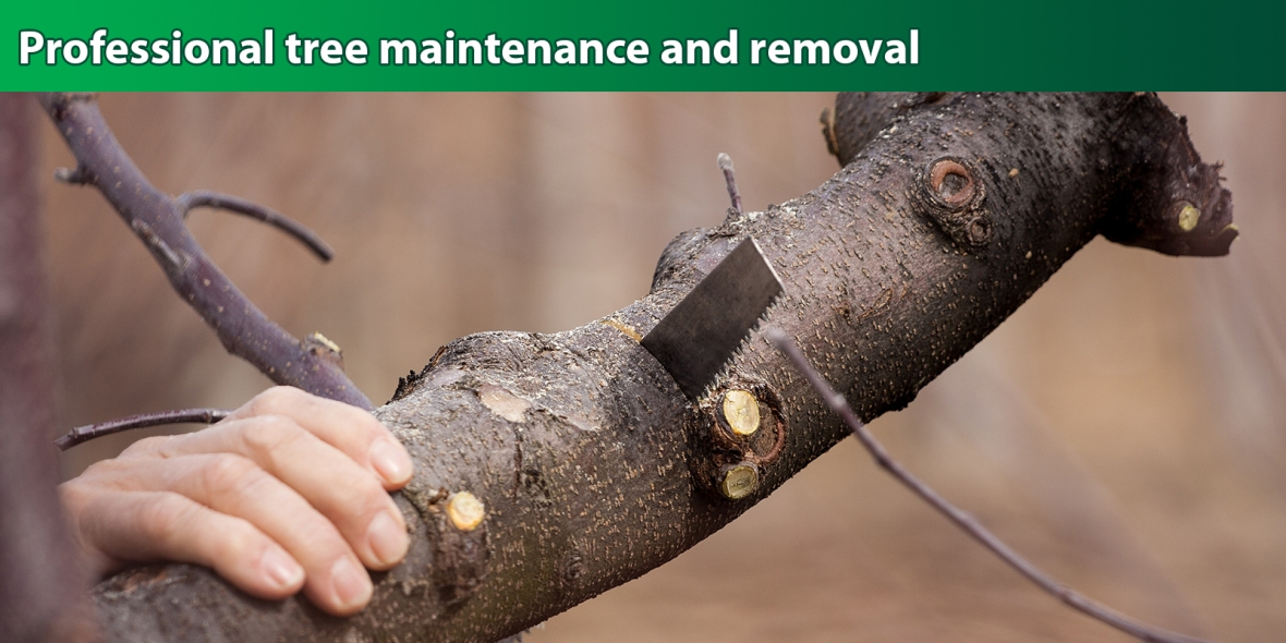 Professional-tree-maintenance-removal